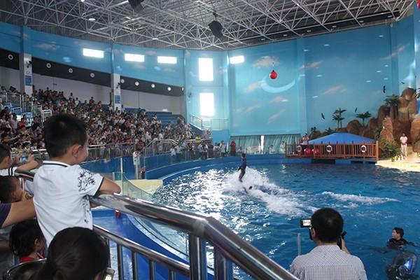 海豚表演开始后,孩子们兴奋的欢呼鼓掌,特别是看到海豚从水中跃到空中